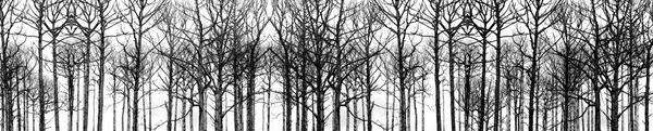 (Working title BW trees #3)