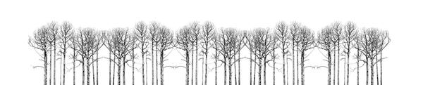 (Working title BW trees #2)