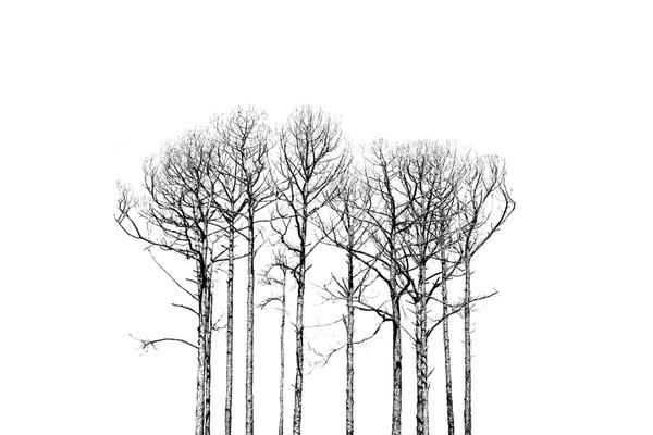 (Working title BW trees #1)